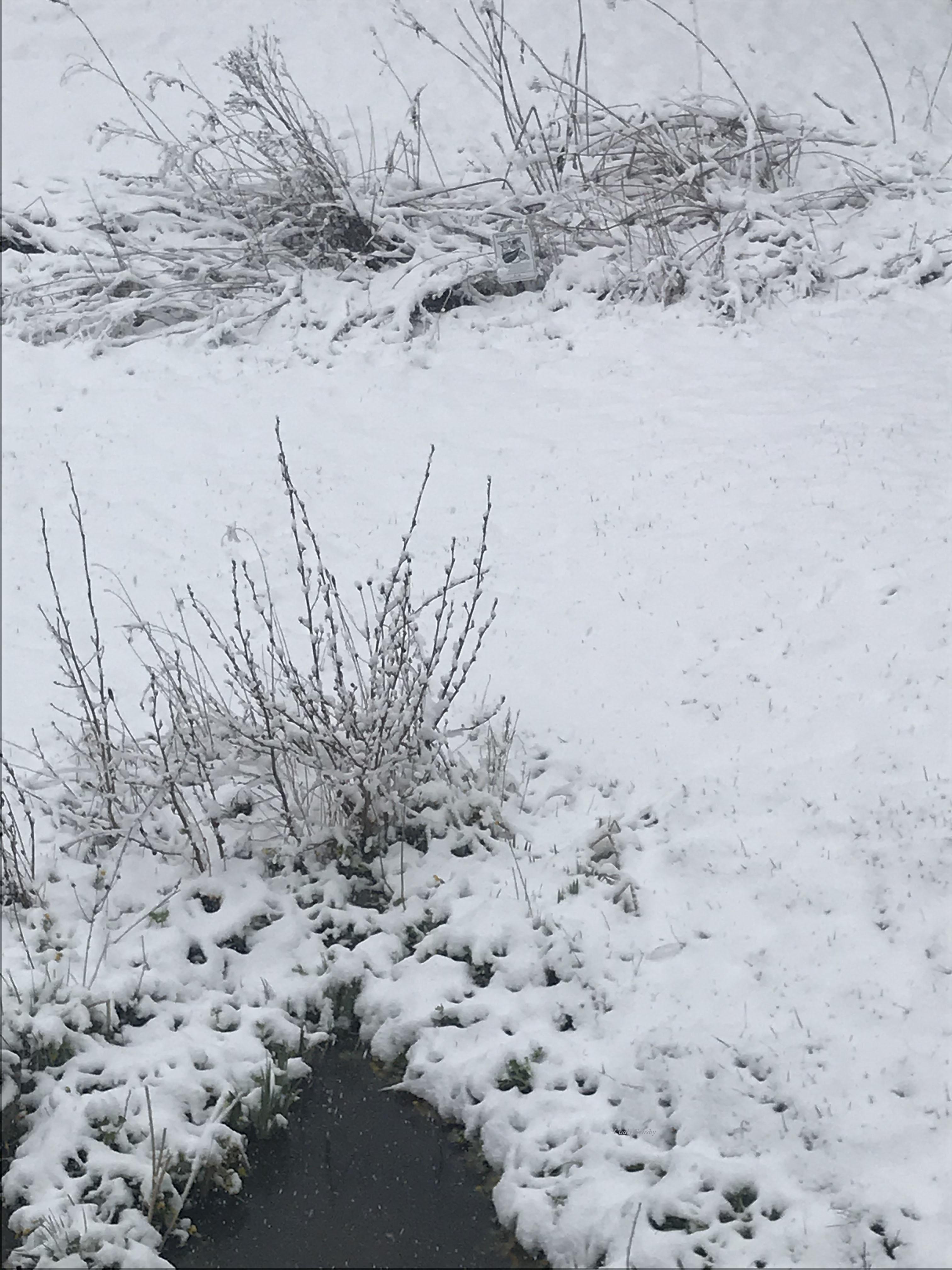 backyard 41720WM.jpg