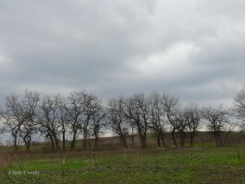 COD East Prairie 41220 treelineWM.jpg