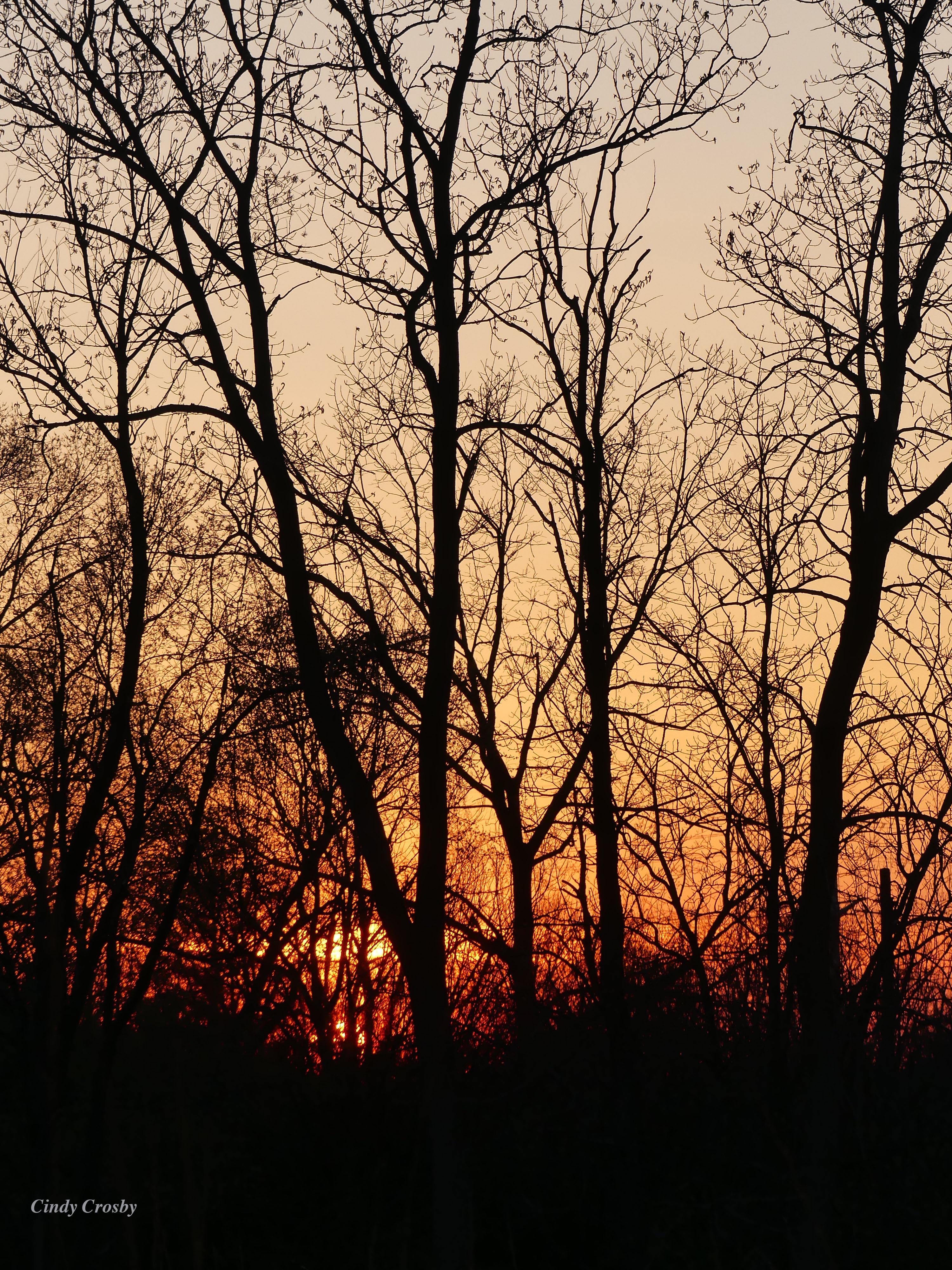 SunsetBelmontPrairietrees42620WM.jpg