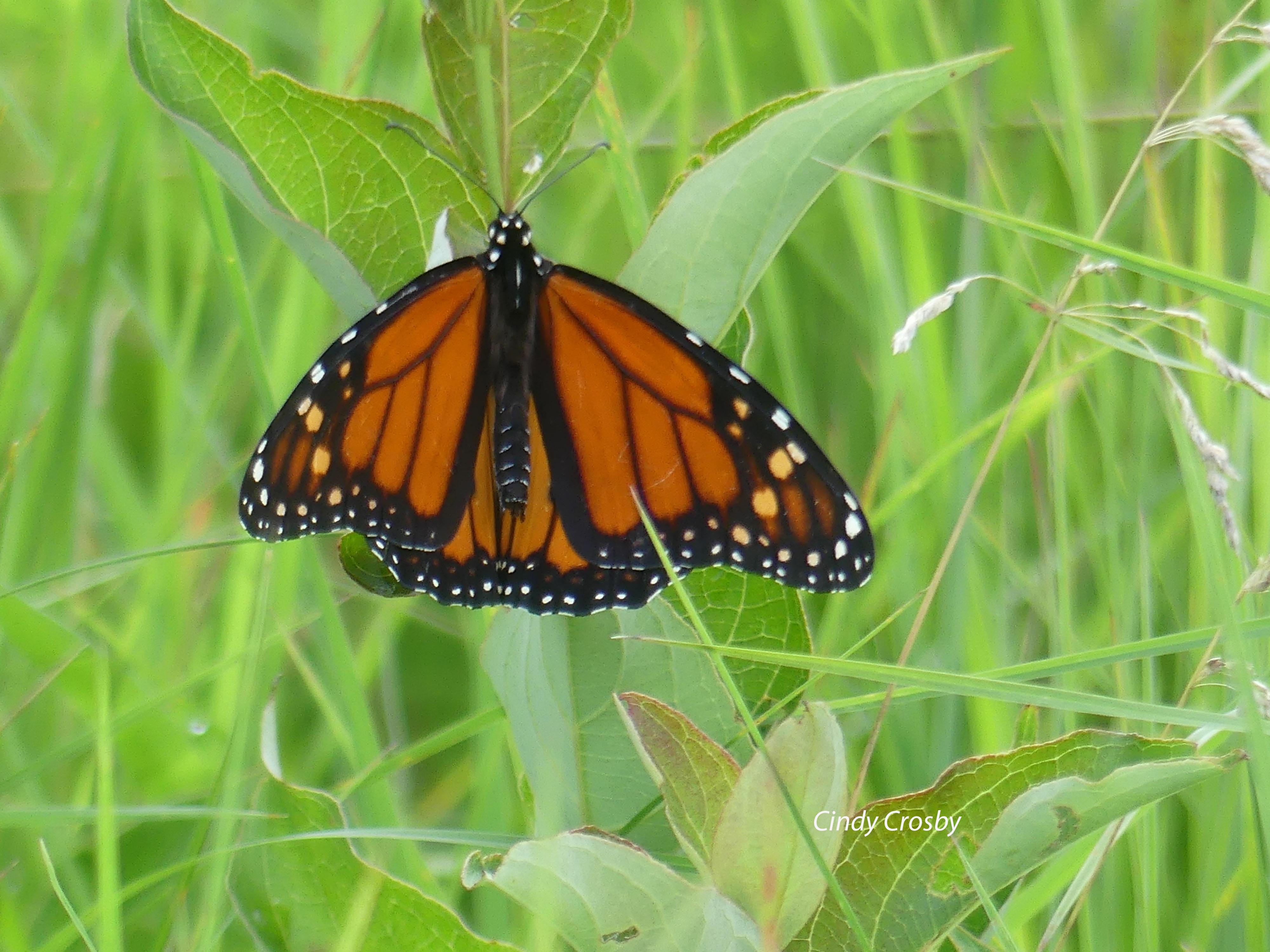 Monarch71120SPMAWM