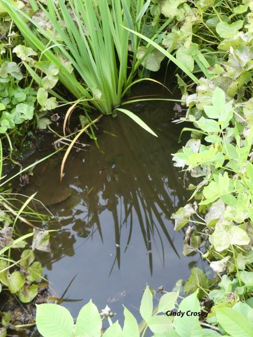 PondGEbackyard71920WM.jpg
